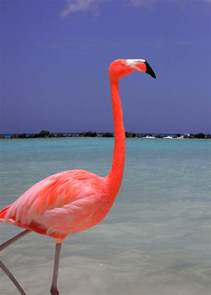 what color is a flamingo 40 beautiful pictures of pink flamingo birds and fur