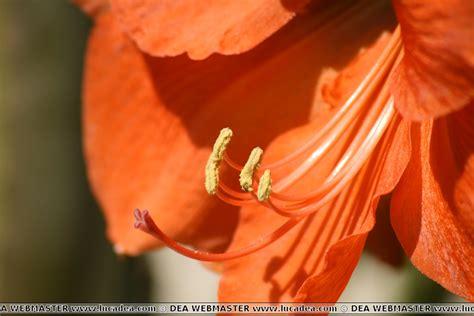 fiore amarillo un fiore bellissimo foto