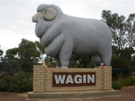 gig of ram big ram at wagin in westen australia picture of wagin