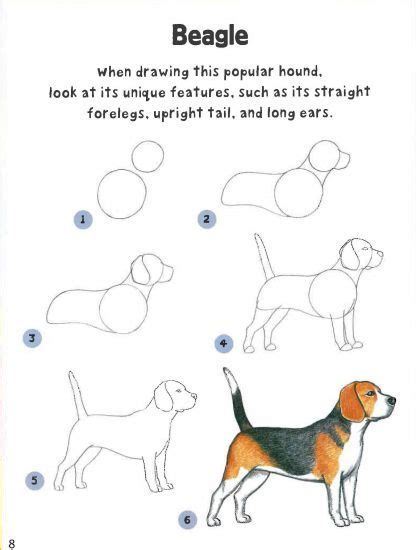 how to a beagle how to draw dogs entertain children quarto creates