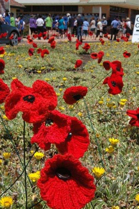 google images poppies knitted remembrance poppies google search poppies for