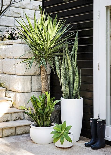 tall potted outdoor plants www pixshark com images