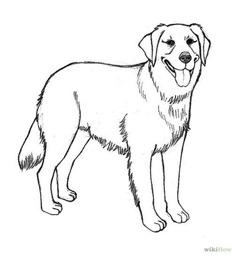 are golden retrievers easy to 127 best images about drawing coloring on what to draw easy easy to draw