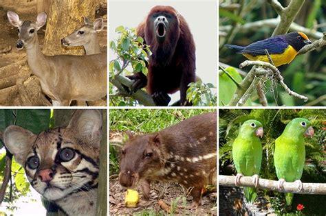 imagenes de animales de zacatecas flora y fauna de guanajuato