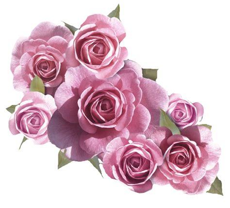 imagenes en png de flores flores rosas en png imagui