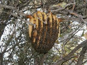 Design Your Own Home Western Australia strathcona beekeepers the sun hive