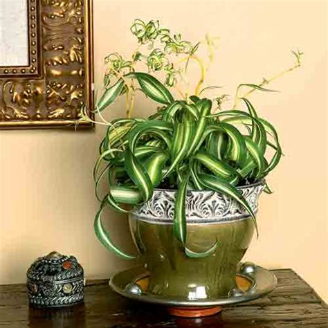 best low light houseplants 10 best low light houseplants costa farms