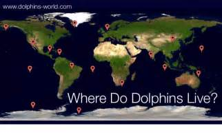 Where Does Live Where Do Dolphins Live