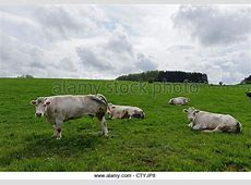 Saugetiere Stock Photos & Saugetiere Stock Images - Alamy Hachiville Luxembourg