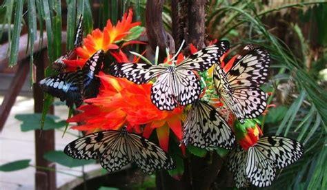 la casa delle farfalle catania riapre a marzo la casa delle farfalle a modica tele