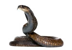 Snakes In All You Need To About Snakes Png All