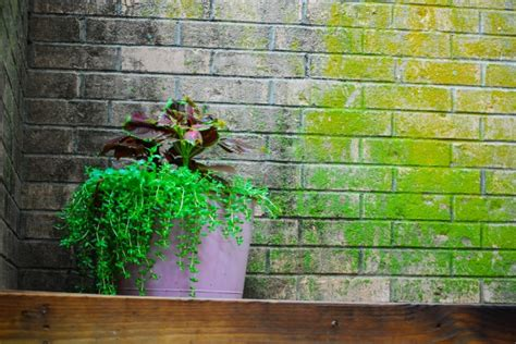 Brick Wall Planters by Planter And Brick Wall Free Stock Photo Domain