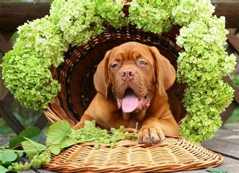 can dogs eat green grapes dogalize il pet social network per il tuo e gatto