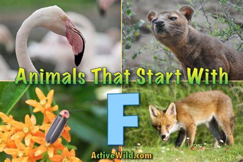 animals that start with u list of amazing animals animals that start with f list of amazing animals