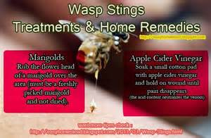 bee sting relief home remedies home remedy for wasp stings remedies need to hints
