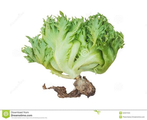 hydroponic root vegetables green salad vegetable isolated stock photo image 53337345