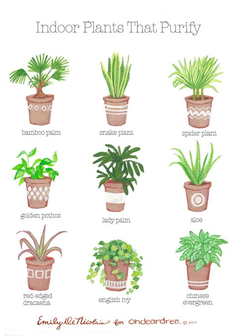 best plants for bedroom simple natural living the best air purifying plants for