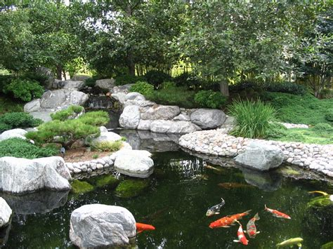 backyard coy ponds japanese garden koi pond by ryuaku on deviantart