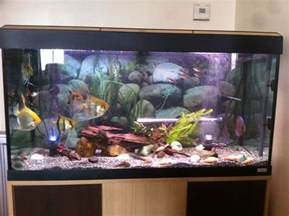 Artsy Bedroom Ideas reduced 200l tropical fish tank fishes southend