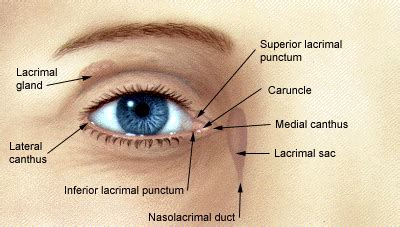 eyelid disorders diagnosis  management american
