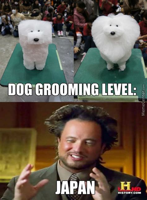 Dog Groomer Meme - after watermelons it s time to reshape dogs