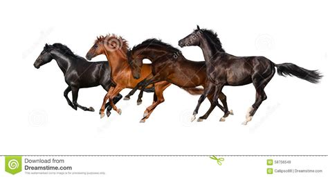 Herd Of Horse Run Gallop Stock Photo - Image: 58756549 Horse Background Clipart