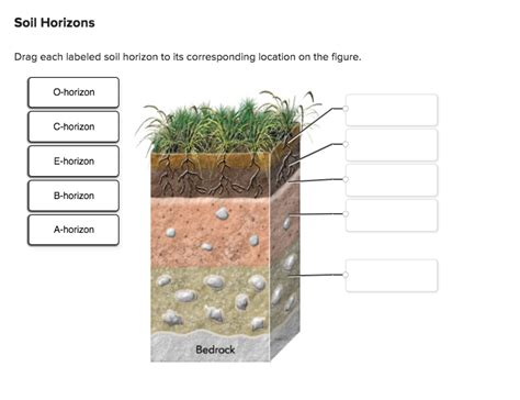 On Location The Drag by Solved Drag Each Labeled Soil Horizon To Its Correspondin
