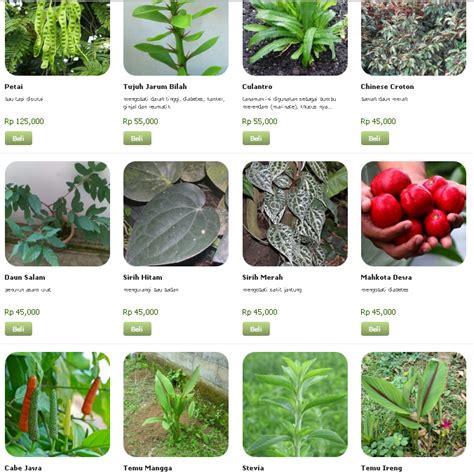 Tanaman Obat Violces daftar nama tanaman obat daftar tanaman obat a w serta