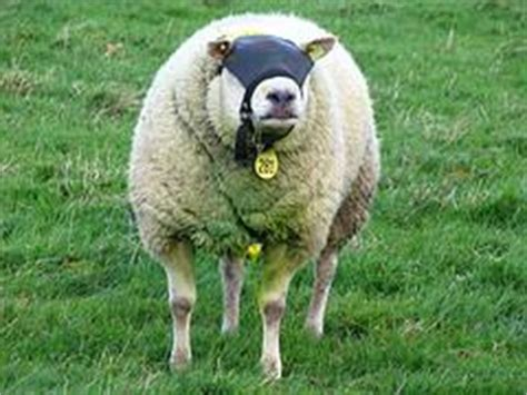 Sheep Blindness the liberal view ign boards