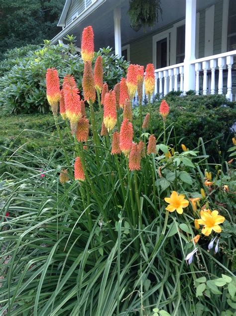 tropical perennial plants 34 best images about tropical perennials on