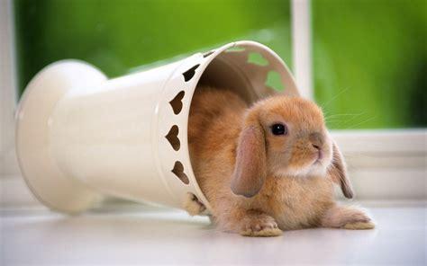 wallpaper cute rabbit android phones wallpapers android wallpaper cute rabbit