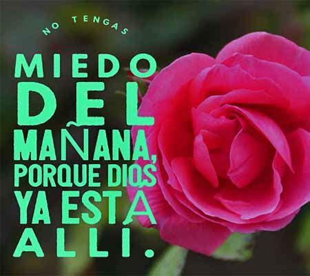 imagenes cristianas de rosas variadas imagenes de rosas con reflexiones cristianas rosas de amor