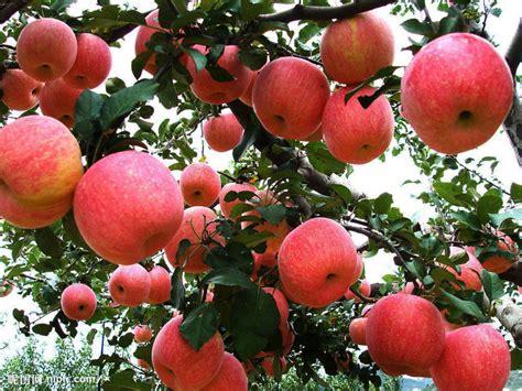 beautiful fruit trees venerable mettananda bhikkhu