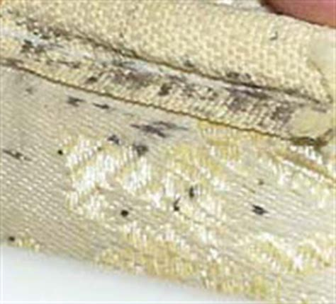 Black Spots On Mattress by Bed Bug Identification Signs And Pictures