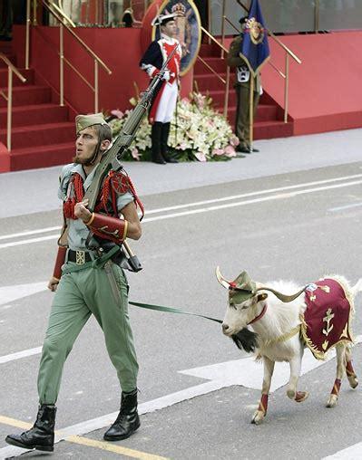 cute boys  goats    cute boys  goats spanish legion