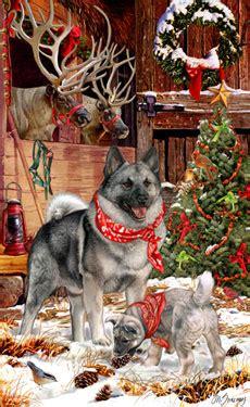 shop  cards norwegian elkhound christmas cards