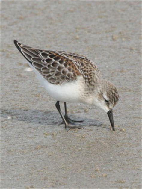 birdfellow birding services social networking and