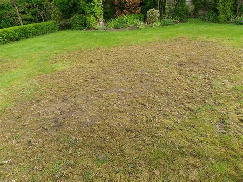https prolawncare co uk chafer grubs