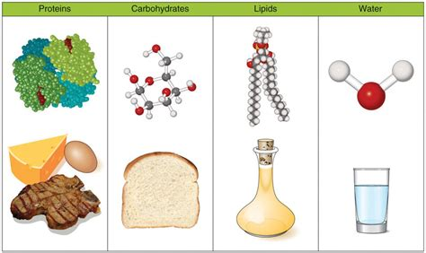 carbohydrates and lipids image gallery lipids and proteins