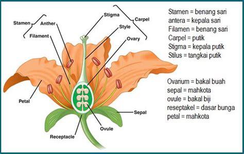9 bagian bagian bunga dan fungsinya lengkap dengan gambar ilustrasi ebiologi