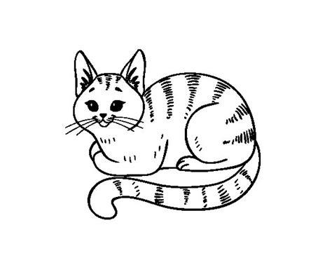 imagenes para colorear gato desenho de gato novo para colorir colorir com