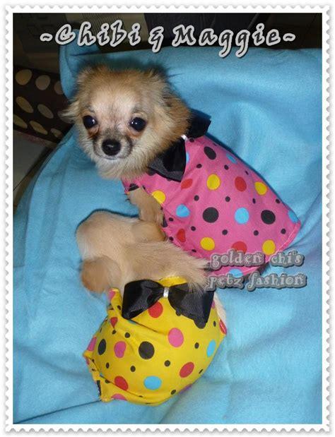 Baju Anjing Polkadot Dress golden chi s petz fashion collection serial 0 4