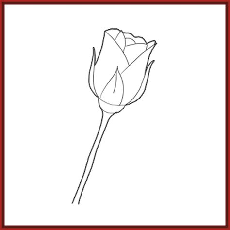 imagenes de rosas faciles imagenes de dibujos a lapiz de rosas f 225 ciles archivos