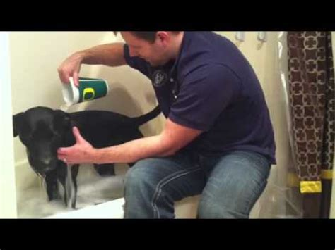 when to give a puppy a bath how to give a bath to a that hates water funnydog tv