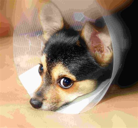 pet dogs sick pet insurance images