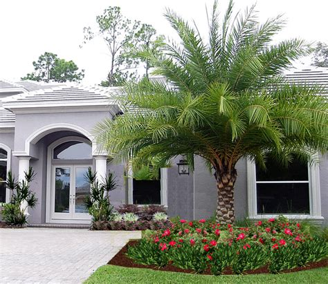 palm tree landscaping ta palms contemporary landscape tropical landscape ta by ta landscape design