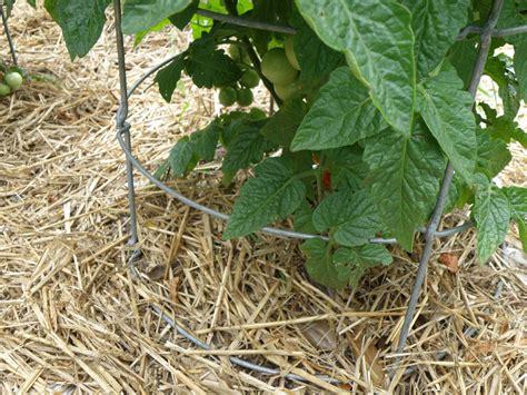 organic mulch a gardener s good friend bonnie plants