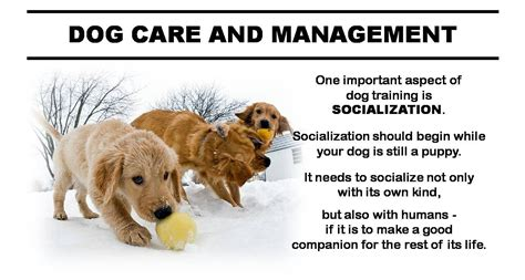 puppy and socialization the importance of puppy socialization care and management