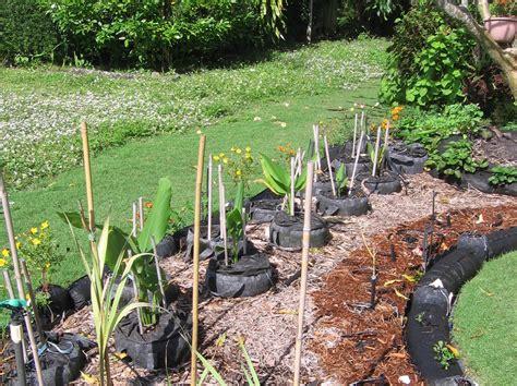 u vegetables florida in florida a turf war blooms front yard vegetable