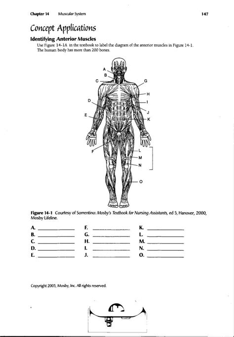 anatomy and physiology diagram quizzes human anatomy labeling worksheets human